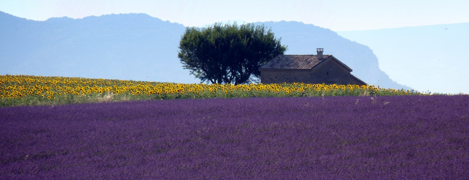 Provence: Travel Dreams
