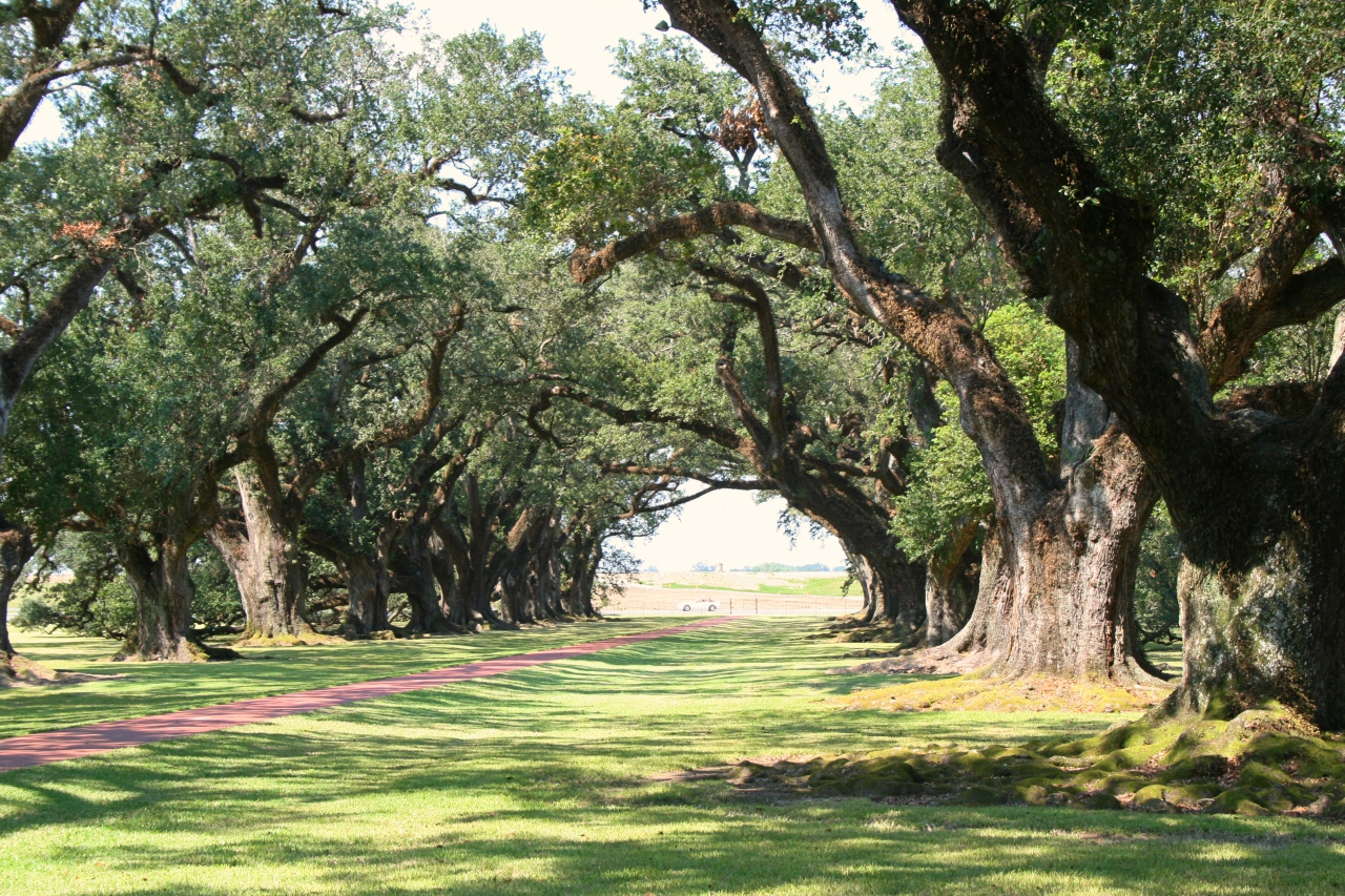 Oak Alley Plantation, Louisiana | The Italian Wanderer
